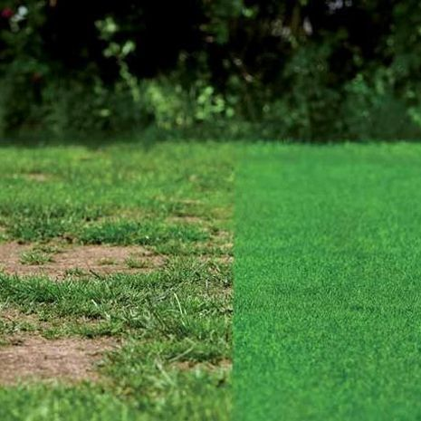 GRASS FIX fűmag