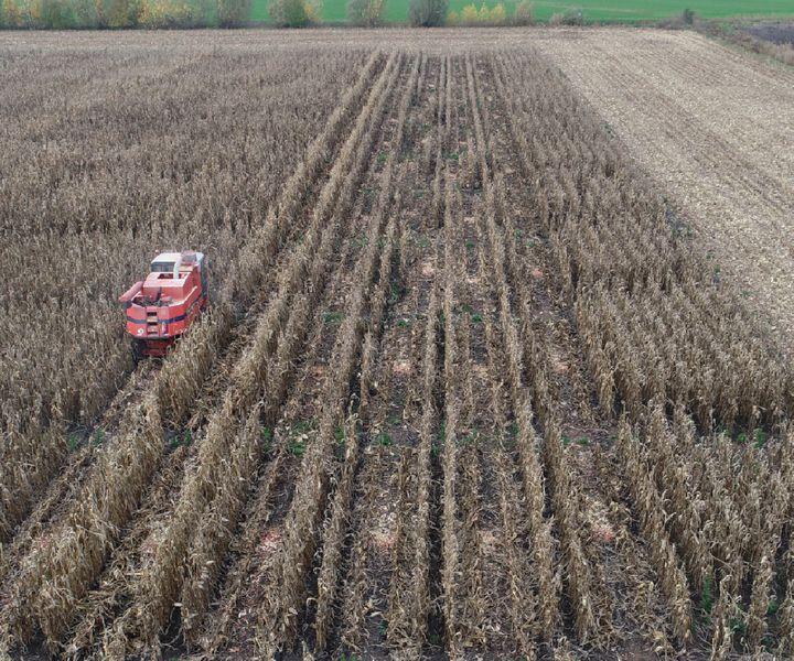 A kukorica tápanyag ellátásáról - az eredmények tükrében - másként…