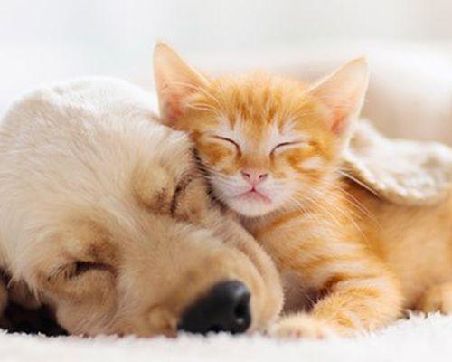 Equimins termékek kutyáknak és macskáknak