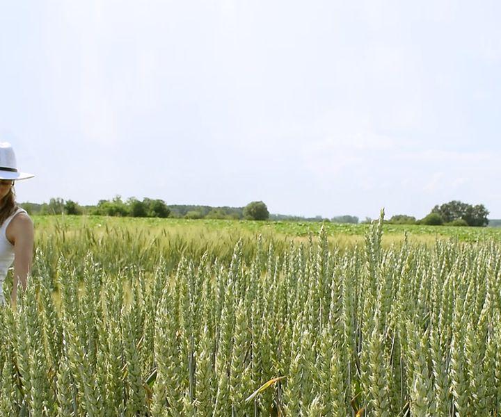 Őszi búza nitrogéntrágyázási kísérletek eredményei, 2019 (II.) - AgroFIELD Akadémia Konferencia előadások