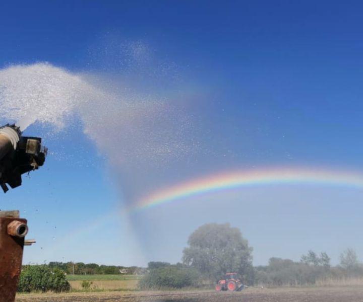 Mennyi öntözővíz kell a kukoricának?