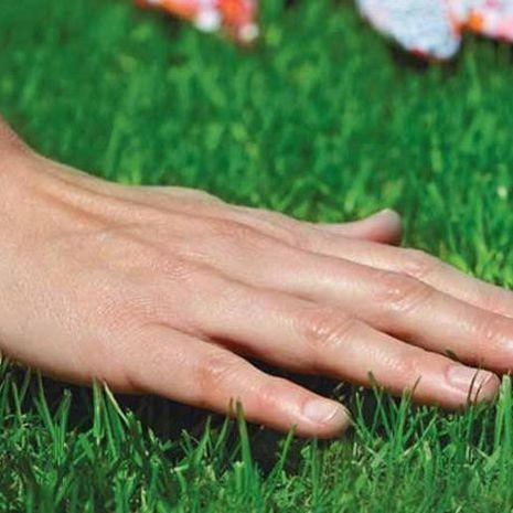 MINI alacsonyra növő fűmag