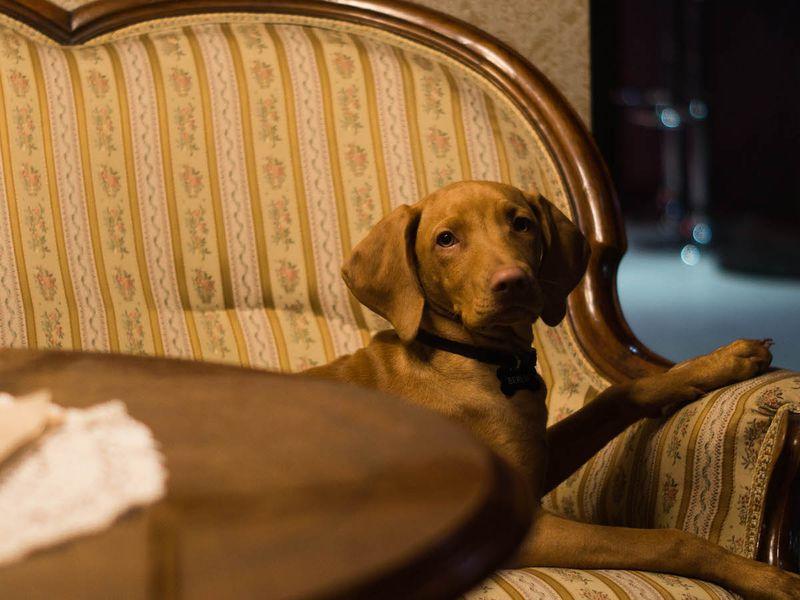 Tudod, hogy mivel foglalkozik egy főállású marketinges kutya? Most eláruljuk!