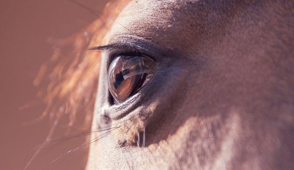 Prémium lovas felszerelés, folyamatosan bővülő kínálat és 10 év tapasztalat, ez vár rád az Equishopnál!