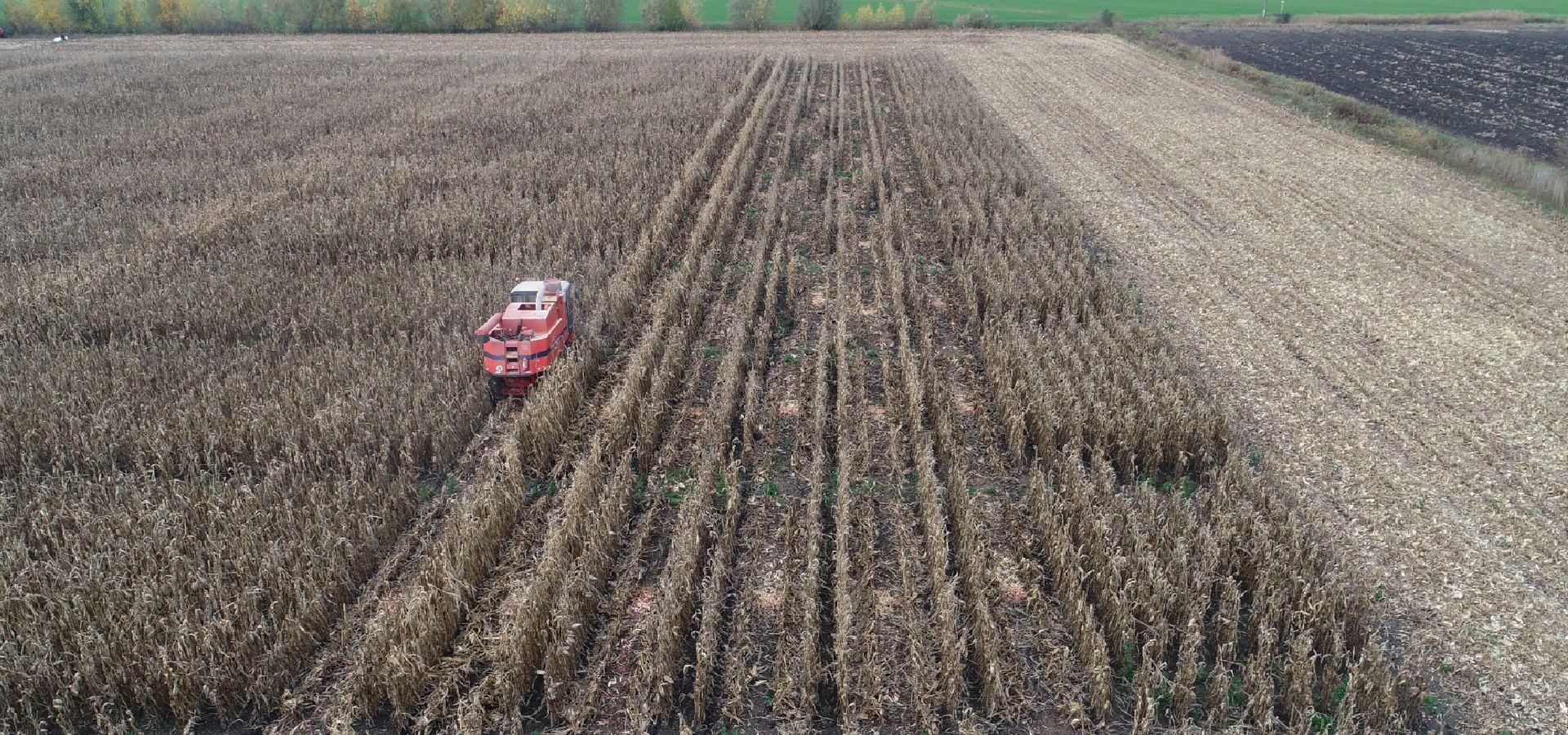A kukorica tápanyag ellátásáról...