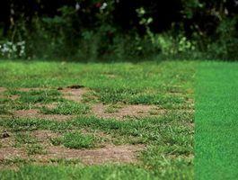 Grass Fix fűmag - Hozza lendületbe a gyepét!