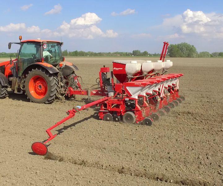 Kukorica talajlakó kártevői