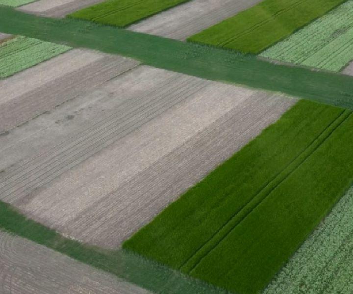 Talajműveléssel vagy talajművelés nélkül? - No-till tartamkísérlet területbejárása Püski